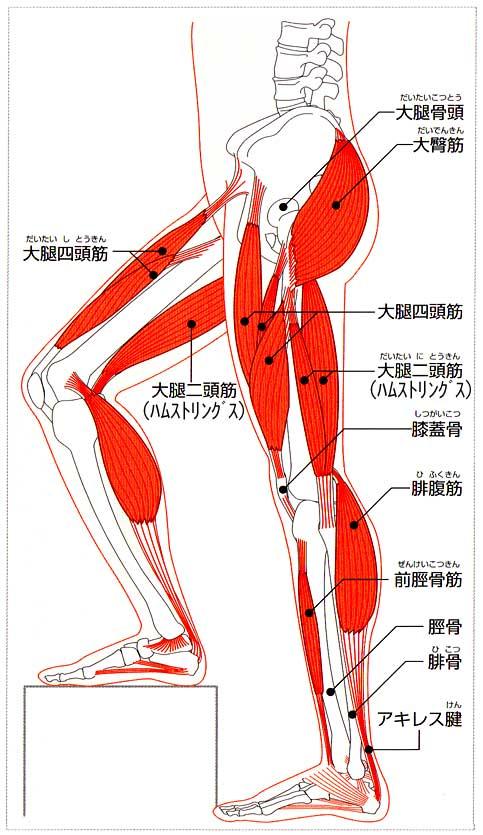 「足 筋肉」の画像検索結果