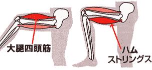ひざを制御する大腿四頭筋とハムストリングス