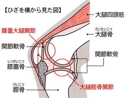 「膝蓋大腿関節」の画像検索結果
